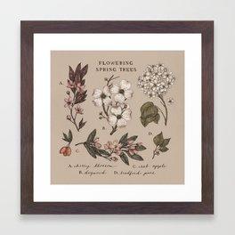 Flowering Spring Trees Framed Art Print