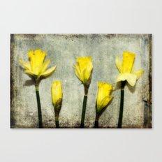Daffodil's Canvas Print