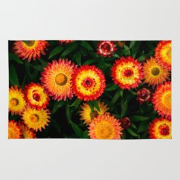 Plant Patterns - Flowery Fireworks Rug