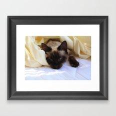Cat Undercovers Framed Art Print
