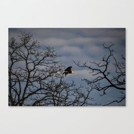 Bald Eagle Lift-off Canvas Print
