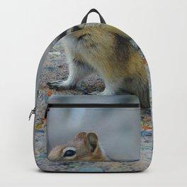 Golden mantled ground squirrel in Jasper National Park   Canada Backpack