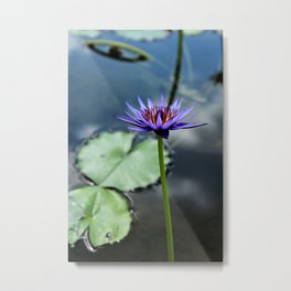 Tall Purple Lily Metal Print