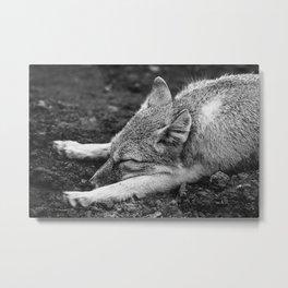 TIRED FOX Metal Print