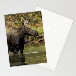 Female Moose at Fishercap Lake No. 1 Stationery Cards