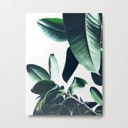 Ficus Elastica #26 #foliage #decor #art #society6 Metal Print