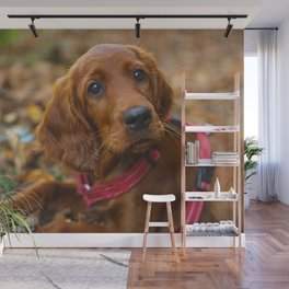 Cute puppy by Gary Sandoz Wall Mural