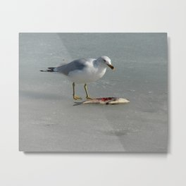 I Eat Fish, Seagull on Ice With Its Meal Metal Print