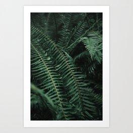 Forest Ferns Art Print