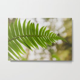 Fern in the shadows of the Redwoods Metal Print