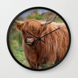 Long haired Highland cattle - Highland cow, Highlander, Heilan coo - Thurso, The Highlands, Scotland Wall Clock