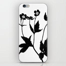 Ranunculus Aconitifolius iPhone Skin