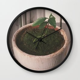 kumquat seedling 2017 Wall Clock