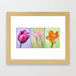 Variety Framed Art Print
