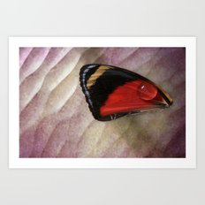 Wing Drop Art Print