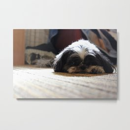 Pondering Pup Metal Print