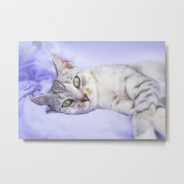 Silver tabby cat on purple blanket Metal Print