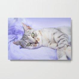 Silver tabby cat on purple blanket Metal Print