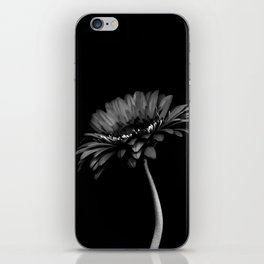 Daisy gerbera. Black and white iPhone Skin