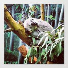 Kozy Koala  Canvas Print