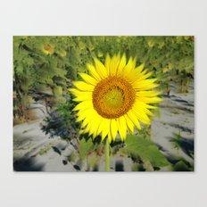 Sunflower King Canvas Print