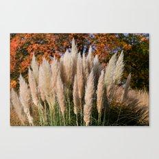 Pampass Grasses Canvas Print