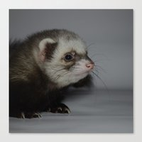 ferret Canvas Prints featuring Ferret by TheDookingFerret