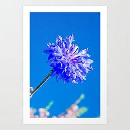 Blue fresh cornflower on the blue background Art Print