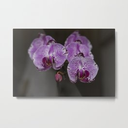 """Orchids Bath"" Metal Print"