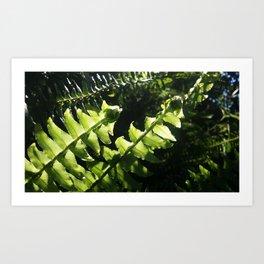 Ferns unrolling. Art Print