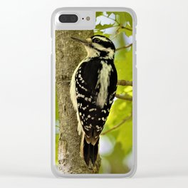 Woodpecker in the Woods by Reay of Light Clear iPhone Case