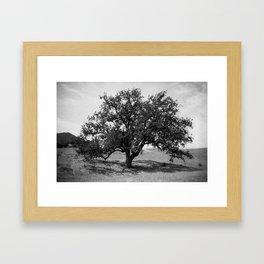 Living Tree Framed Art Print