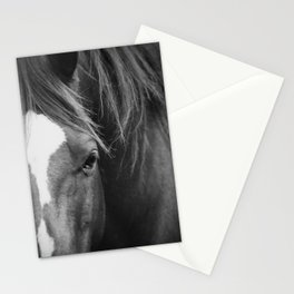 A Horse's Stare Stationery Cards
