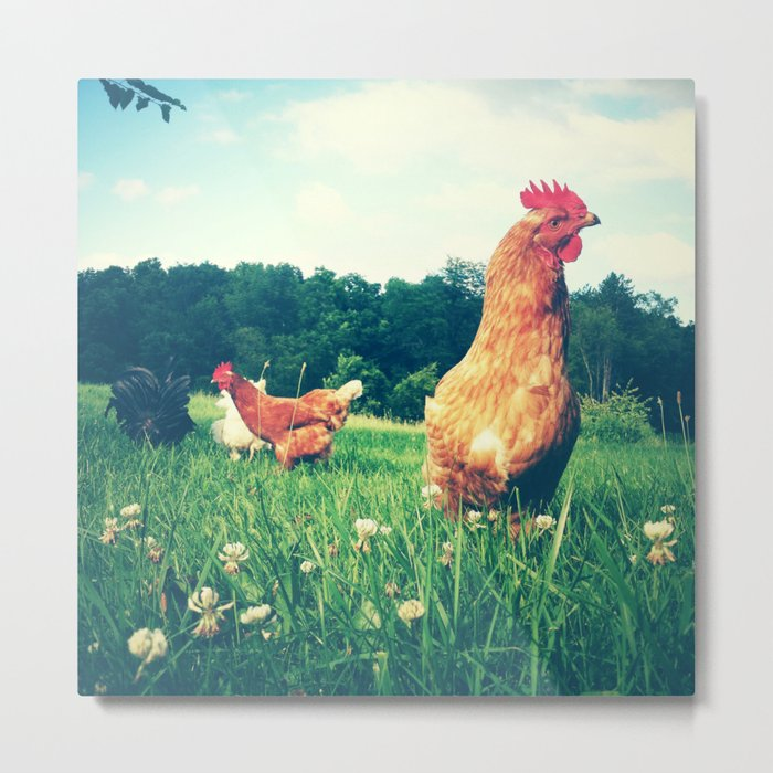 The Life of a Chicken Metal Print