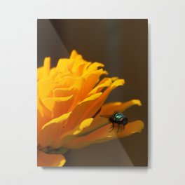 Zinnia Fly Metal Print