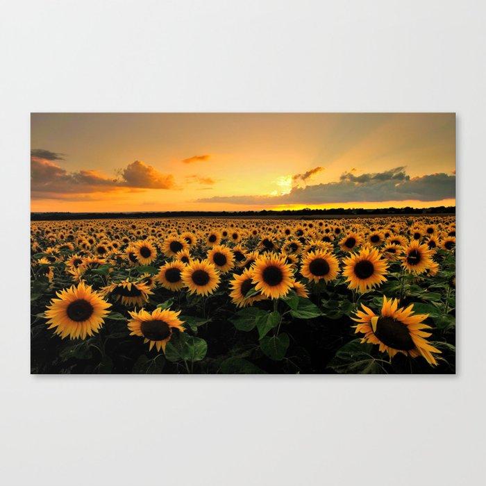 Sunflower field Leinwanddruck