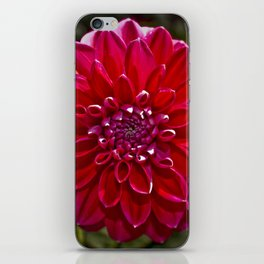 Nature Mandala 3 iPhone Skin