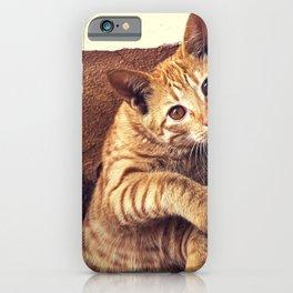 Cat roux iPhone Case