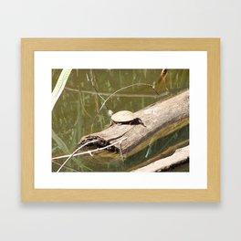 Turtley Framed Art Print