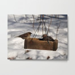Feeding friends? Metal Print