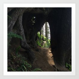 Forest Portal Art Print