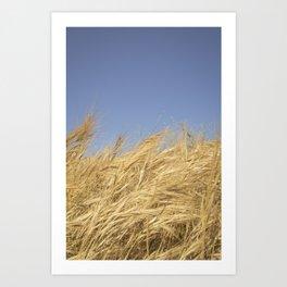 Golden Straw Art Print