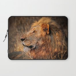 Lion in the evening light, South Africa Laptop Sleeve