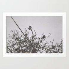 small blooms Art Print