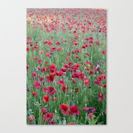 Bright poppies Canvas Print