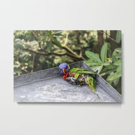 seductive bird Metal Print