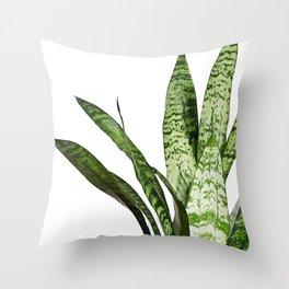 Snake Plant Leaves - Sansevieria Throw Pillow