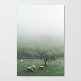 Sheeps - vert Canvas Print
