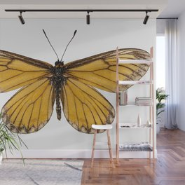 """Butterfly species Acraea issoria """"Yellow Coster"""" Wall Mural"""