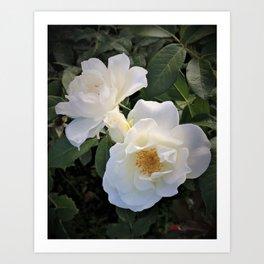 White flower in Butchart's Garden Art Print